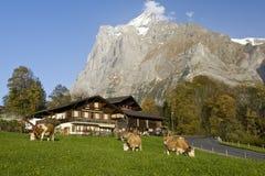 Cortijos de la montaña con Wetterhorn Imagenes de archivo