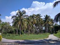 Cortile del villaggio con la palma immagine stock