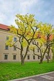 Cortile interno del castello di Wawel a Cracovia in Polonia fotografia stock libera da diritti