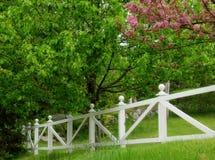 Cortile in primavera Fotografia Stock Libera da Diritti