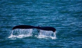 Cortina de agua de la ballena Imagenes de archivo
