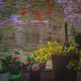 Cortina de la flor Imagenes de archivo