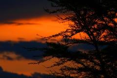 Cortina del árbol y puesta del sol dramática fotos de archivo