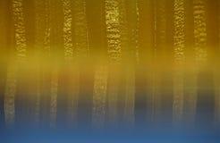 Cortina rayada en sombras del beige y del oro con el efecto del refle Foto de archivo