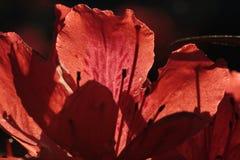 Cortina y luz Imagen de archivo