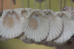 Cortinas das conchas do mar Imagens de Stock Royalty Free