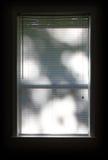 Cortinas de janela Fotografia de Stock