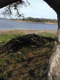 Cortinas do lago fotos de stock royalty free