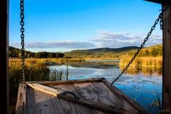 Cortinas do pássaro do Condado de Tioga fotografia de stock royalty free