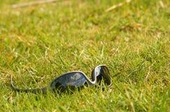 Cortinas en hierba Foto de archivo