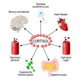 Cortisol ορμόνη Ανθρώπινο ενδοκρινές σύστημα διανυσματική απεικόνιση