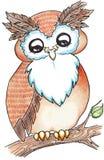 Coruja animal dos desenhos animados no ramo de árvore Imagem de Stock