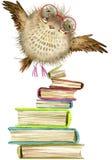 Coruja Coruja bonito pássaro da floresta da aquarela Ilustração da escola Pássaro dos desenhos animados Fotografia de Stock
