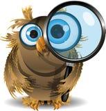 Coruja curiosa Fotos de Stock