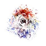 Coruja da cabeça da ilustração de cor do vetor Imagens de Stock