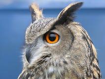 Coruja de águia imagens de stock royalty free