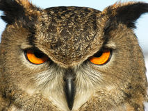 Coruja de águia Foto de Stock Royalty Free