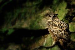 Coruja de águia da rocha no verde Fotos de Stock Royalty Free