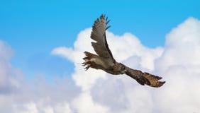 Coruja de águia de Turkmenian foto de stock royalty free