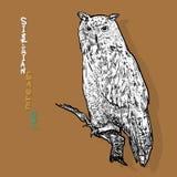 Coruja de águia Siberian, ou sibiricus do bubão do bubão Vetor Imagem de Stock