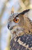 Coruja de águia. Fotografia de Stock Royalty Free