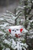 Coruja do White Christmas com capas protetoras para as orelhas vermelhas Fotos de Stock