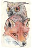 Coruja e raposa Imagens de Stock