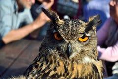 Coruja em um festival medieval Lastra da cidade de Marmantile um SIGNA Foto de Stock