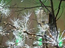 Coruja em uma filial de árvore imagens de stock royalty free
