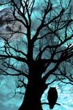 A coruja empoleirou-se na árvore antiga na noite moonlit Fotografia de Stock Royalty Free