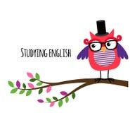 Coruja inteligente que estuda a bandeira inglesa ilustração stock