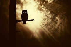 Coruja no ramo de árvore na floresta escura misteriosa Fotos de Stock Royalty Free