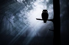 Coruja no ramo de árvore na floresta mágica na noite Imagem de Stock