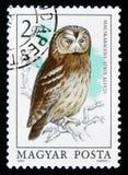 Coruja ocre ou aluco marrom do Strix da coruja, cerca de 1984 Imagem de Stock