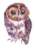 Coruja, pássaro, aquarela, esboço, pintura, animais, ilustração Imagens de Stock Royalty Free