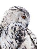 Coruja preto e branco isolada foto de stock royalty free