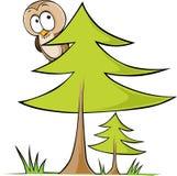 Coruja que senta-se na árvore - ilustração do vetor isolada Foto de Stock Royalty Free