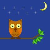 A coruja senta-se em um ramo de árvore no céu noturno Fotos de Stock Royalty Free