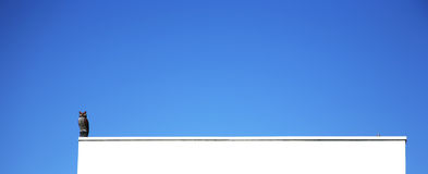 Coruja solitária Fotos de Stock