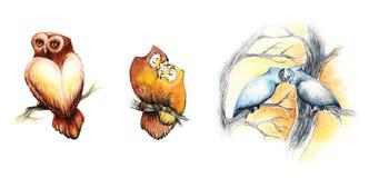 Corujas bonitos da aquarela ilustração do vetor