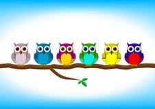 Corujas coloridas engraçadas em seguido Imagem de Stock
