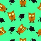 Corujas com tampões dos graduados, fundo verde Imagem de Stock