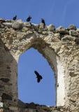 corvi Immagini Stock Libere da Diritti
