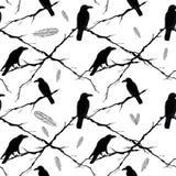 Corvi, rami di albero e piume senza cuciture Vettore Immagini Stock Libere da Diritti