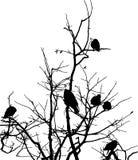 corvi sui rami dell'albero Immagine Stock Libera da Diritti