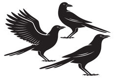 corvo ilustração do vetor