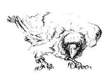 corvo Fotografia Stock Libera da Diritti