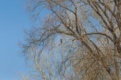 corvo Immagini Stock Libere da Diritti