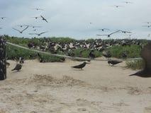 corvo Foto de Stock Royalty Free