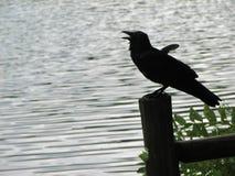 Corvo appollaiato in un lago immagine stock